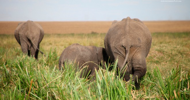 Majestuosa África